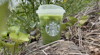 Starbucks Iced Pineapple Matcha Latte Review