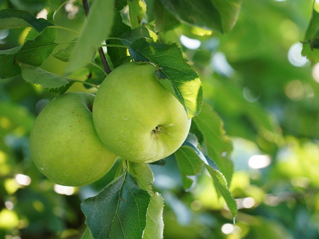 Apple Crisp Macchiato Review